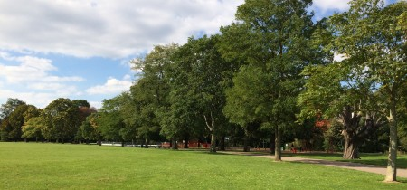Trees in Victoria Park