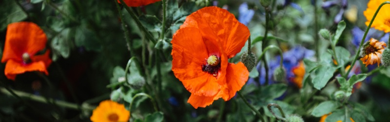 poppy competition